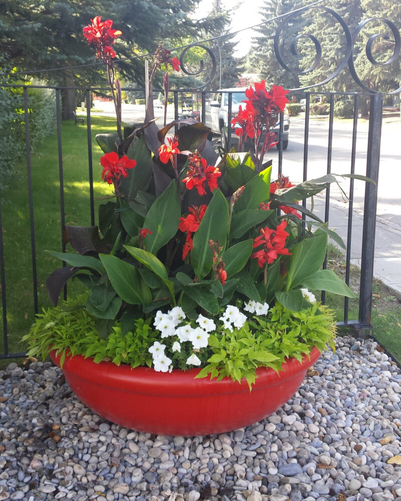 flower-feature-calgary-landscaping